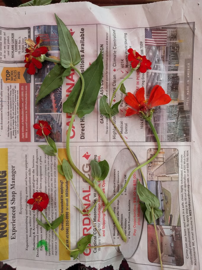 flowers laying on newspaper.