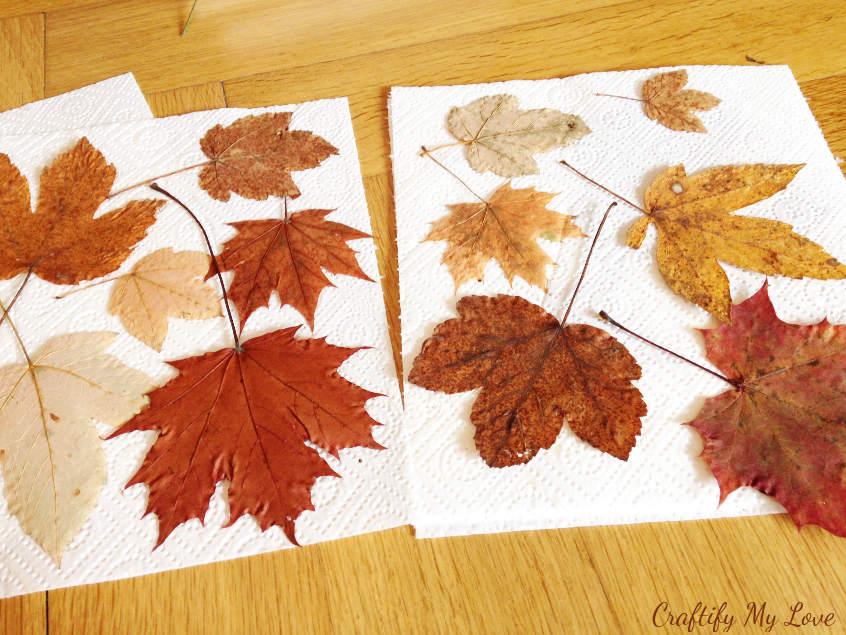 Pressed autumn leaves.